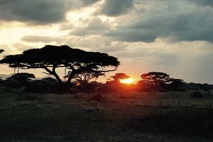 Sonnenaufgang im Nationalpark in Kenia